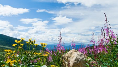 flowers blooming in a colorado rocky mountain summer